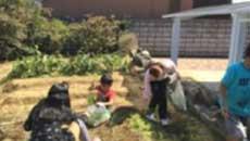 屋外家庭菜園